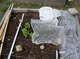 Shade Cloth Protecting Your Plants by Eat Live Grow Paleo The Perfect First Vegetable Garden