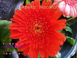 nene s garden 76 and still gardening