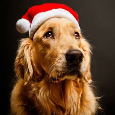 a pet lover is sure to admire this christmas card the dog in the