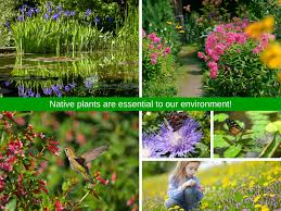 native plants native plants are essential habitat landscapes com