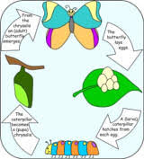 butterfly and caterpillar crafts for kids