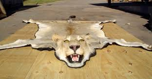 Fake Lion Skin Rug With Head Lion Rug With Head Rugs Ideas