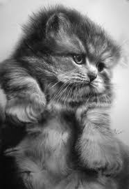 imagenes a lapiz de gatos dibujos de gatos hechos a lápiz todo lo que eres