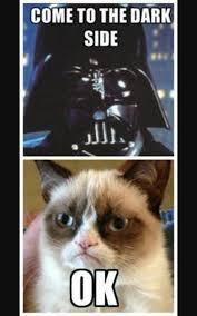 Star Wars Cat Meme - funny star wars memes star wars amino