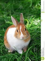 rabbit bunny bunny rabbit stock photo image of animals closeup nature 832796