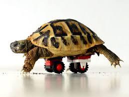 disabled tortoise gets a lego u0027wheelchair u0027 cnet
