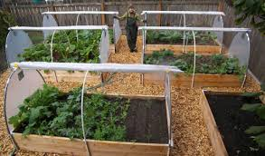Container Vegetable Gardening Ideas Container Gardening Vegetables Interesting Ideas For Home