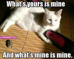 Clean Cat Memes - pin by ofelia on kitty pinterest kitty
