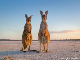 Most Amazing by World U0027s Most Amazing Photos Of Nature Perthnow