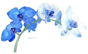 Blue Orchids I Painted Some Blue Orchids Watercolor