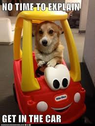 Puppy Memes - no time to explain just get in the car we have to go vote for