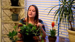 low light houseplants youtube
