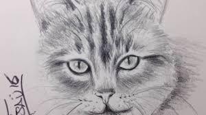 imagenes a lapiz de gatos gato a lapiz dibujos de gatos youtube