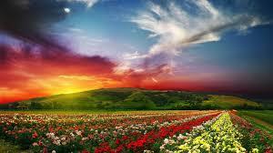 flower garden hd free wallpapers download hd wallpaper
