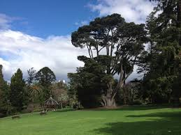 Melb Botanical Gardens by Melbourne Attractions Moonlight Cinema At The Royal Botanical