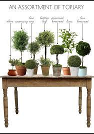 Topiaries Plants - topiaries copy u2026 pinteres u2026