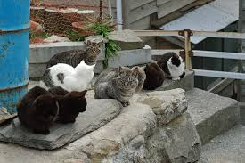 cat island japan s cat island is safe