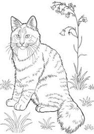 cat color pages printable cat coloring sheets cat u0027s pic