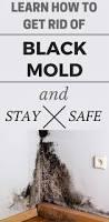 how do you get rid of black mold how do you get rid of black mold