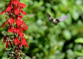 red house garden hummingbirds like vegetables too