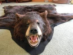 fake bear images reverse search