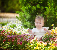 baby flowers beautyful flowers baby flowers walpapers
