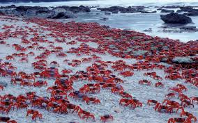 11 of the best indian ocean islands travel