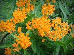 missouri native plant nursery it u0027s not work it u0027s gardening plants i miss