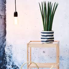 easycare plants