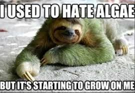 Sloth Jokes Meme - sloth jokes sparrowbots