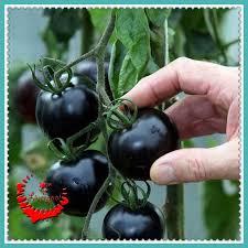 get cheap black tomato seed aliexpress alibaba