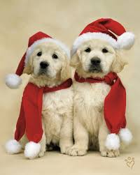 231 best christmas dogs and cats images on pinterest christmas