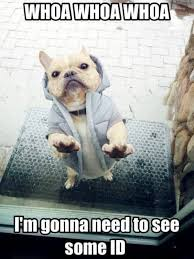 Cute Memes - when your dog takes his bouncer job way too seriously funny