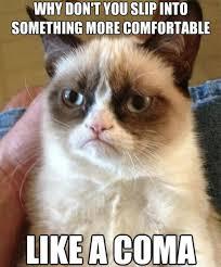 Grumpy Cat Coma Meme - the 50 funniest grumpy cat memes funny grumpy cat memes grumpy