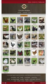 Best Backyard Chicken Breed by Best 25 Chicken Breeds Chart Ideas On Pinterest