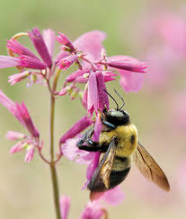 Flowers For Morning Sun - annual flower seeds u0026 plants buy u0026 grow flowers bulbs burpee com
