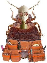 Bug Bombs For Bed Bugs How Bed Bugs Shrug Off Pesticides