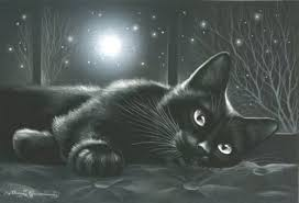 black cat comfy inside moon shining leave pictures black