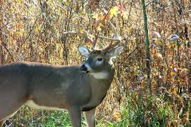 Tennessee wildlife images Tennessee 39 s most popular hunting season opens saturday jpg