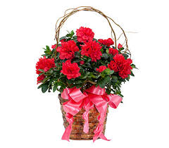 florist raleigh nc plants delivery raleigh nc raleigh florist raleigh plants