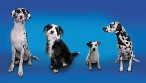 the advantages of buying from a dog breeder