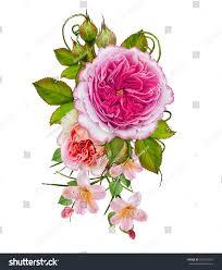 flower arrangement delicate pink roses isolated stock illustration