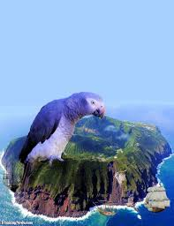 giant parrot island pictures freaking news