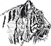 tigers reading comprehension quiz