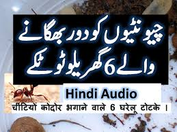 How To Kill Ants In The Kitchen by How To Get Rid Of Ants In Your House Hindi Urdu Video Urdu