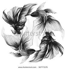 illustration golden fish veiltail hand drawing stock illustration