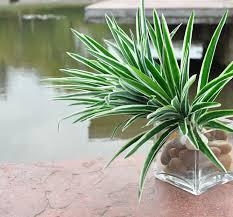 Imitation Plants Home Decoration Online Buy Wholesale Plastic Artificial Plants From China Plastic