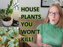 best house plants stop killing your house plants best house plants youtube