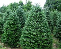 where to buy trees in oxfordshire