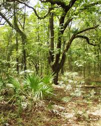 Tropical Dry Forest Animals And Plants - florida native plant society